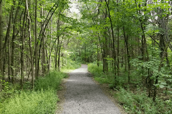 Heading east on the Cabin trail